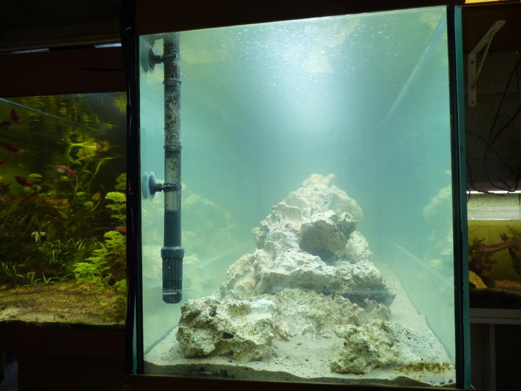 Ma petit histoire Aquariophile de 2009 à aujourd'hui  P1100220