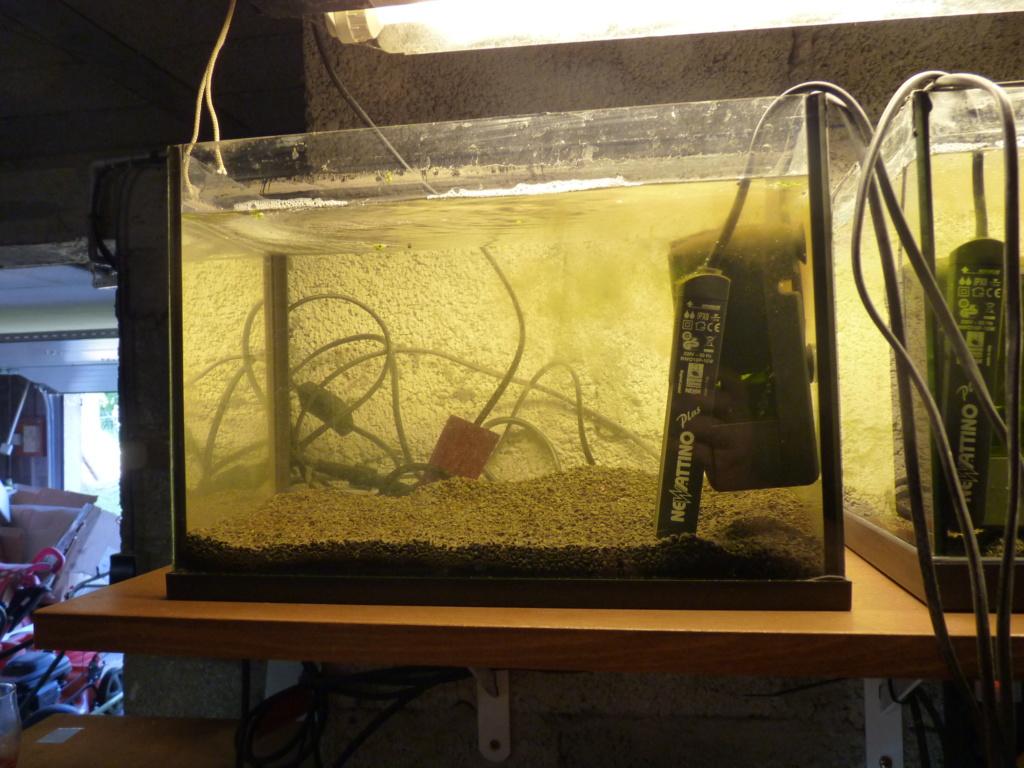 Ma petit histoire Aquariophile de 2009 à aujourd'hui  P1100222