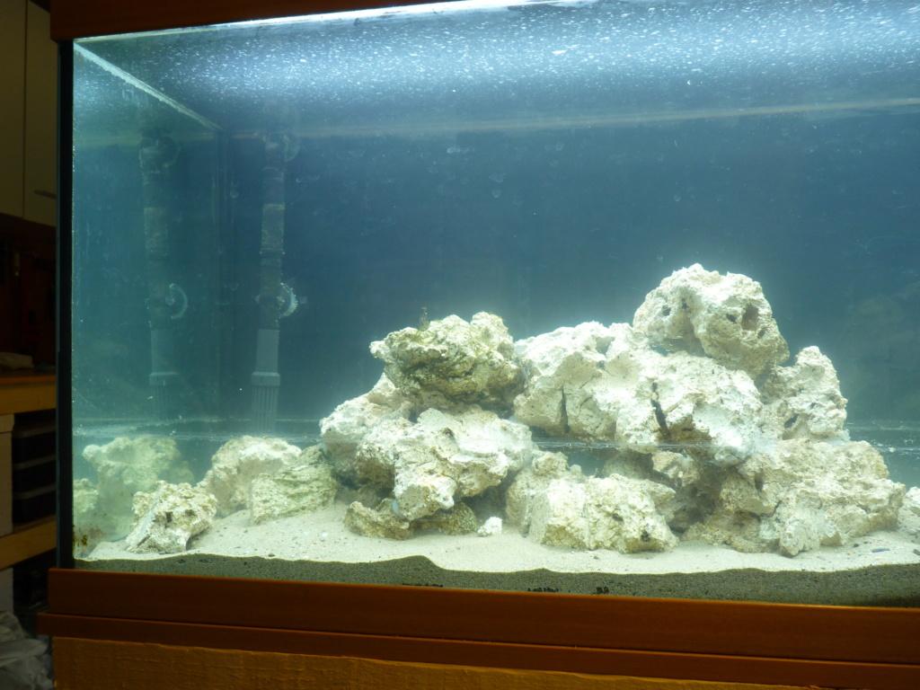 Ma petit histoire Aquariophile de 2009 à aujourd'hui  P1100225