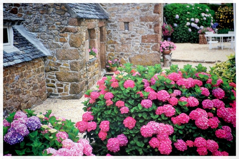 vieilles pierres et fleurs! Aout_114