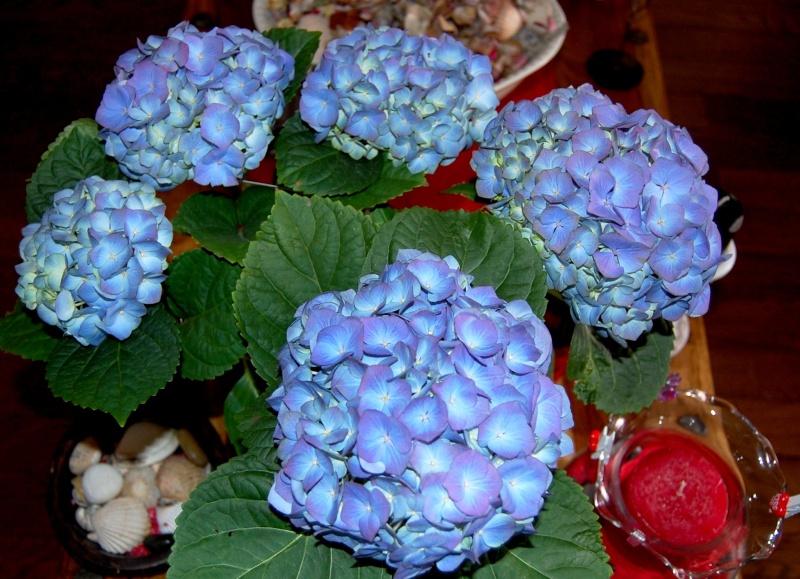 Fleurs ... tout simplement - Page 3 Celle_10