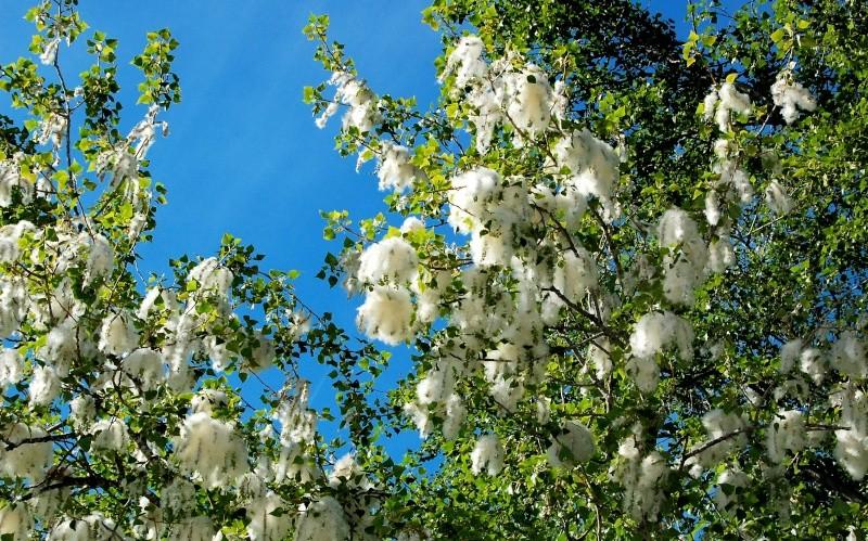Fleurs ... tout simplement - Page 5 Ciel_a10
