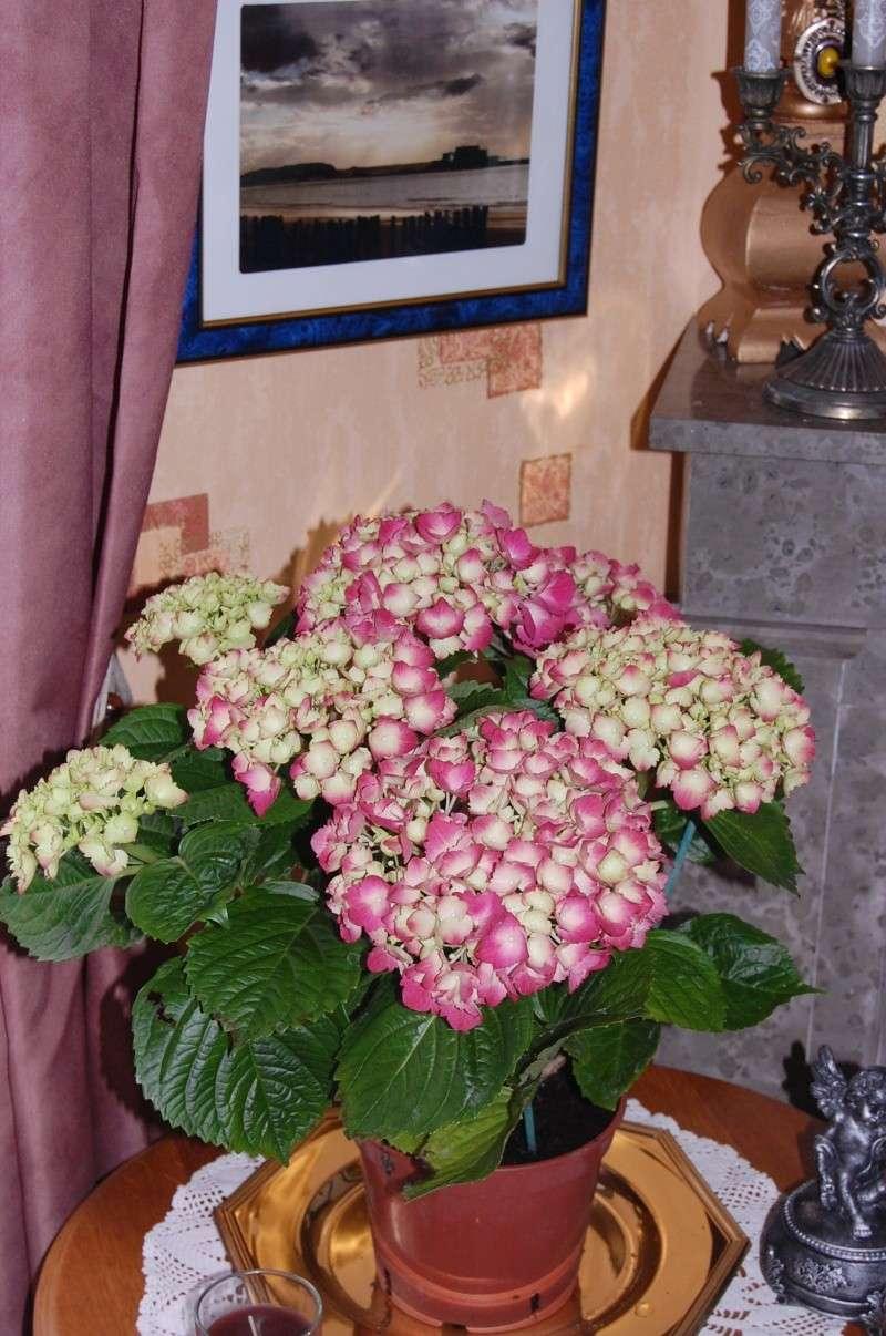 Fleurs ... tout simplement - Page 3 Dsc_1711