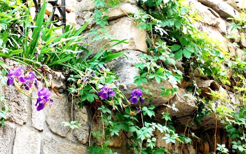balade sous 30 degres Fleurs11