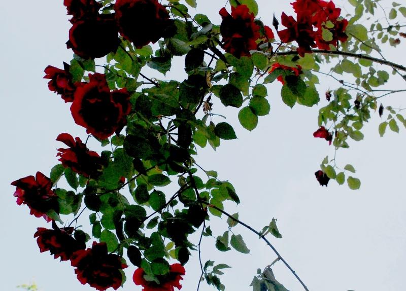 balade sous 30 degres Fleurs12