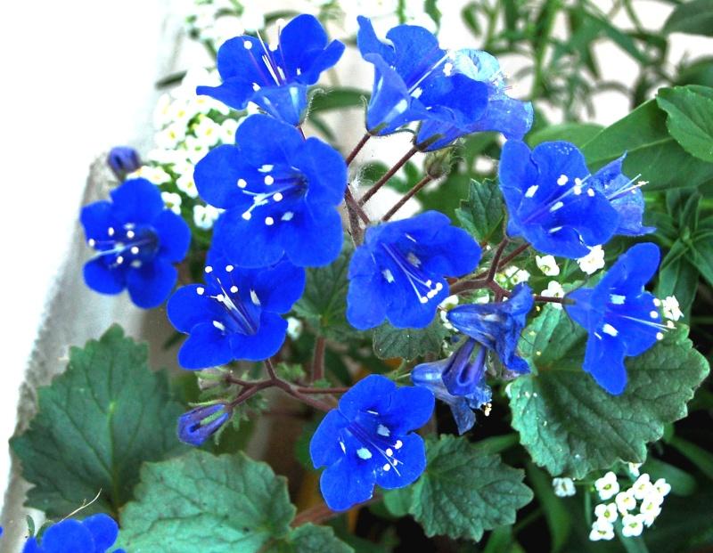 Fleurs ... tout simplement - Page 6 Fleurs14
