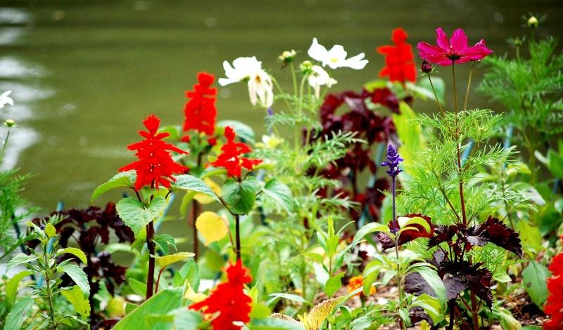 Fleurs ... tout simplement - Page 6 Fleurs19
