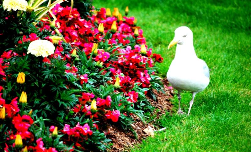 Animaux, oiseaux... etc. tout simplement ! - Page 5 Goel310