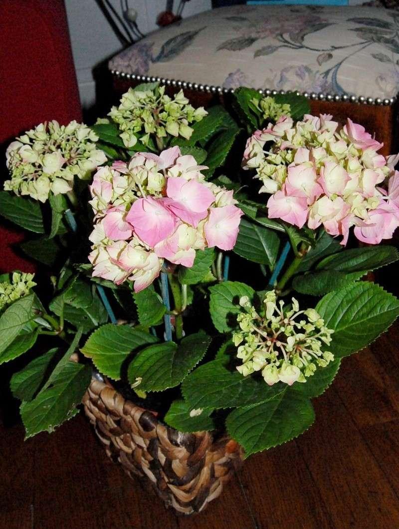Fleurs ... tout simplement - Page 3 H10