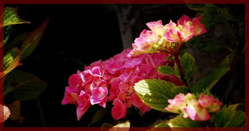 Fleurs ... tout simplement - Page 6 Hort1210