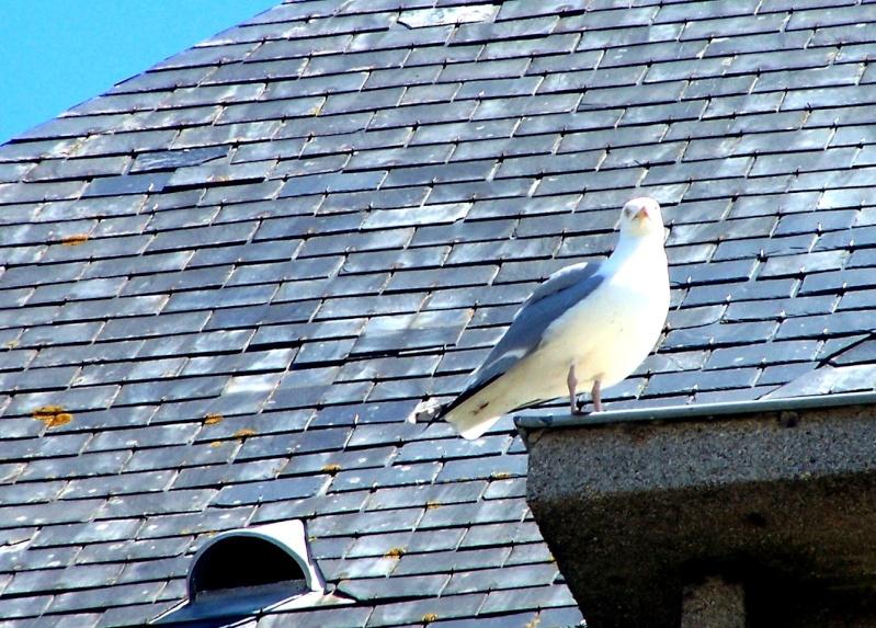 Animaux, oiseaux... etc. tout simplement ! - Page 2 M10