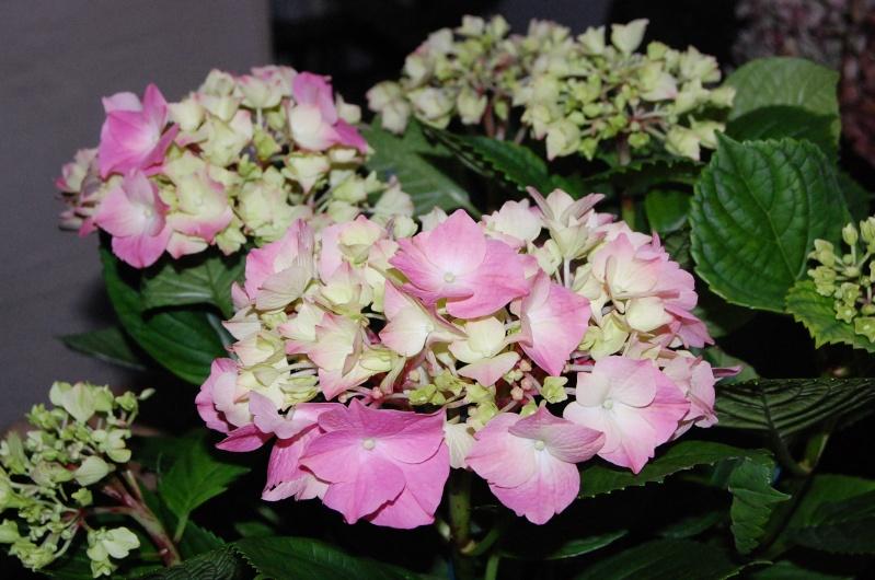 Fleurs ... tout simplement - Page 3 Montal11