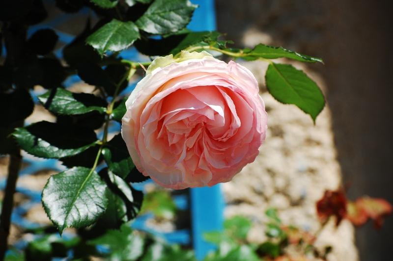 Fleurs ... tout simplement - Page 6 Nikon_30