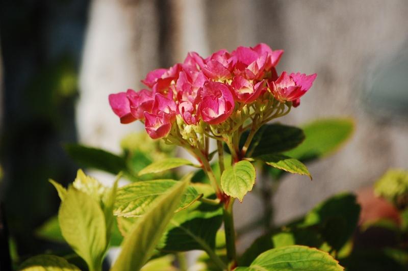 Fleurs ... tout simplement - Page 6 Nikon_36