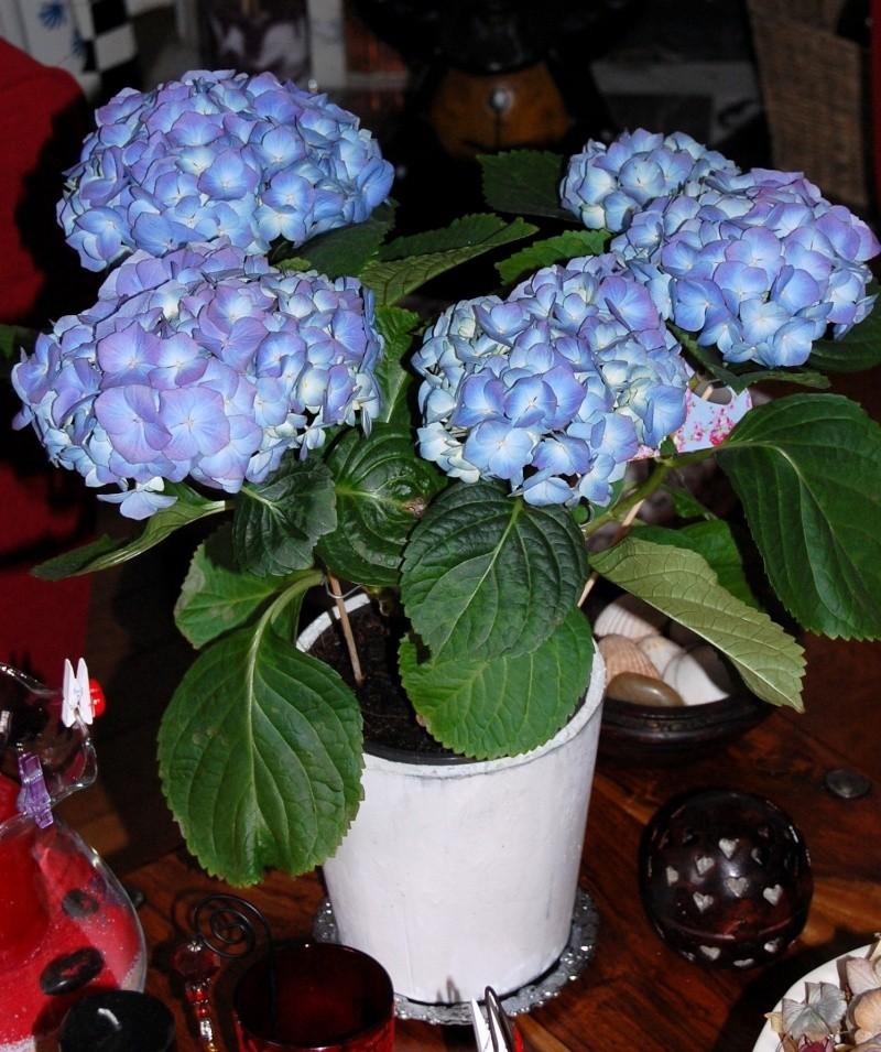 Fleurs ... tout simplement - Page 3 Ort510