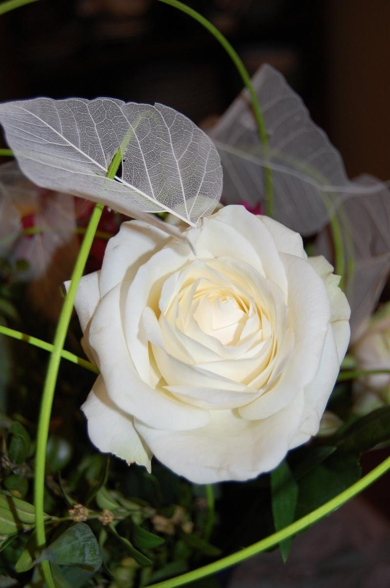 Fleurs ... tout simplement - Page 4 Rose10
