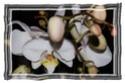 Fleurs ... tout simplement - Page 3 Montal10