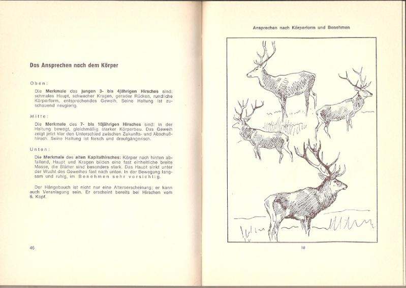 Anthologie de mes sorties Pirsch et affût - Page 4 Numari10