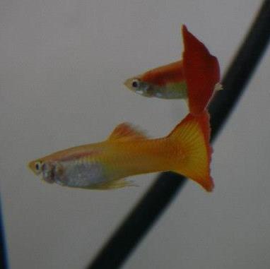 Mon petit aquarium 56 l 30288411