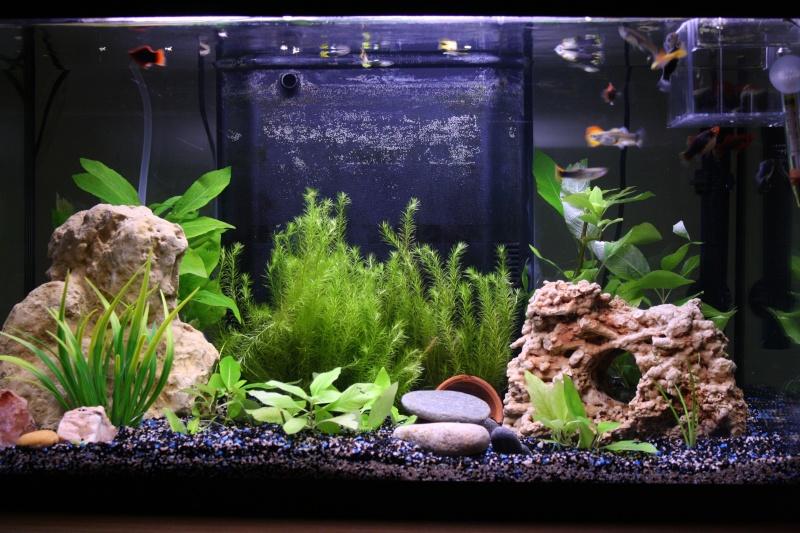 Mon petit aquarium 56 l Img_9017