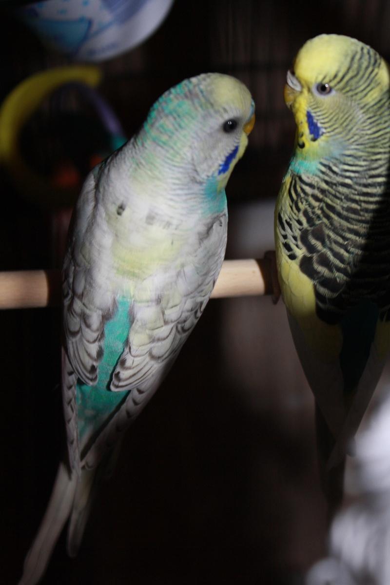 Oasis et Pastel Les_p_10
