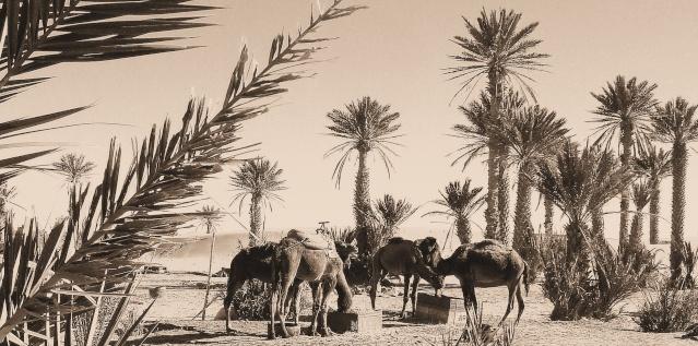 PHOTOS ANCIENNES DES JUIFS DU MAROC Maroc_11