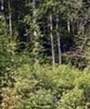 La forêt de feuillus