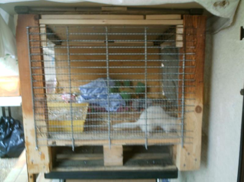 présentation de vos animaux: furets: - Page 2 Fureto37
