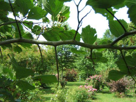 Le jardin  paradisiaque Aiguil10