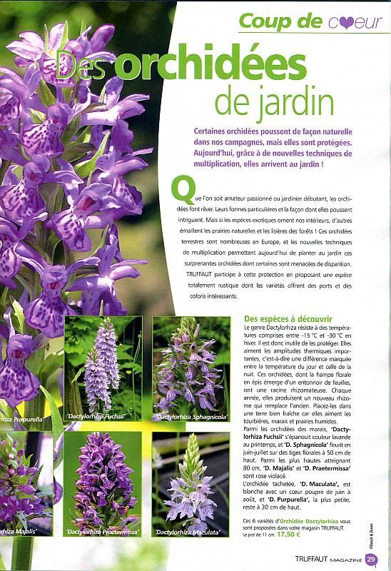 culture d'orchidées européennes Truffa10