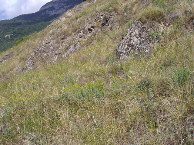 Un petit tour dans les steppes suisses... Pa290016