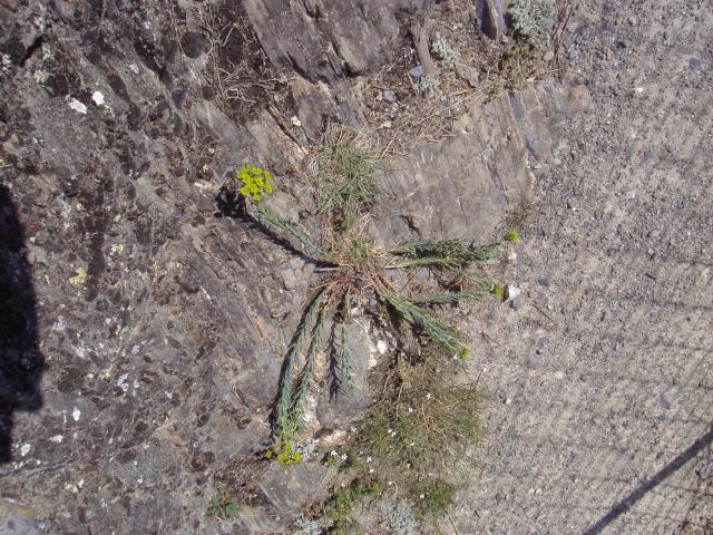 Un petit tour dans les steppes suisses... Pa290017