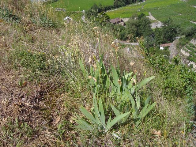 Un petit tour dans les steppes suisses... Pa290022