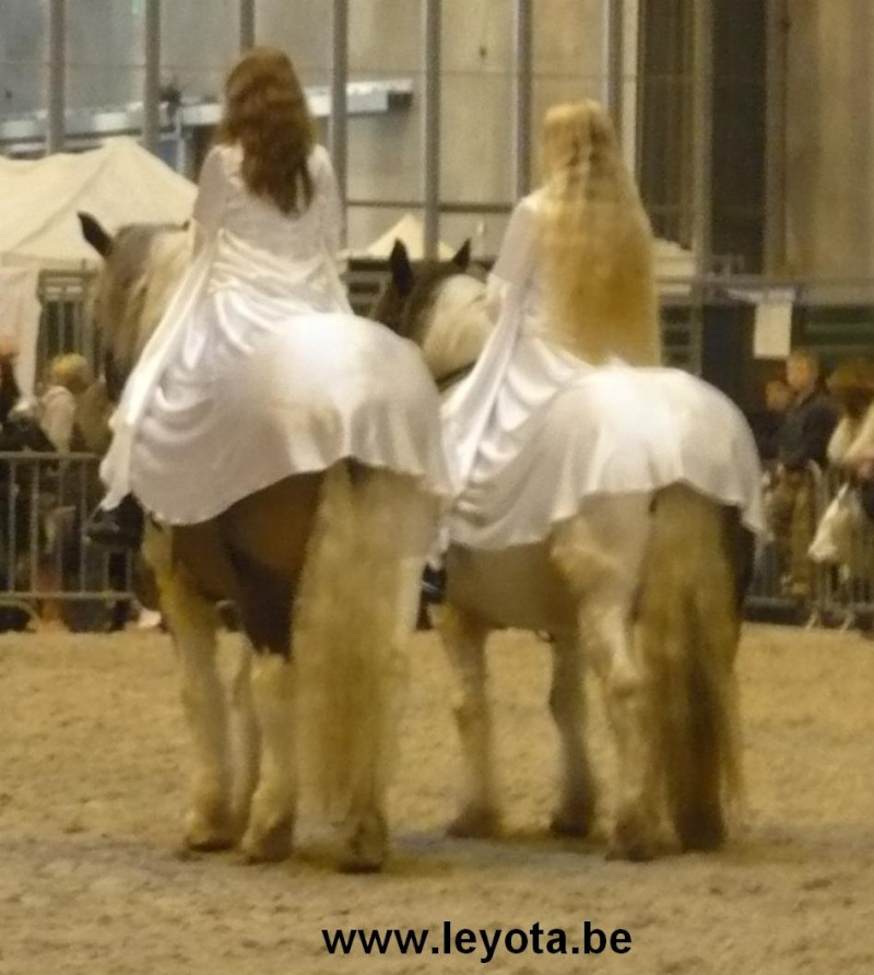 Salon du cheval ---> VIDEO + photos 2008-011
