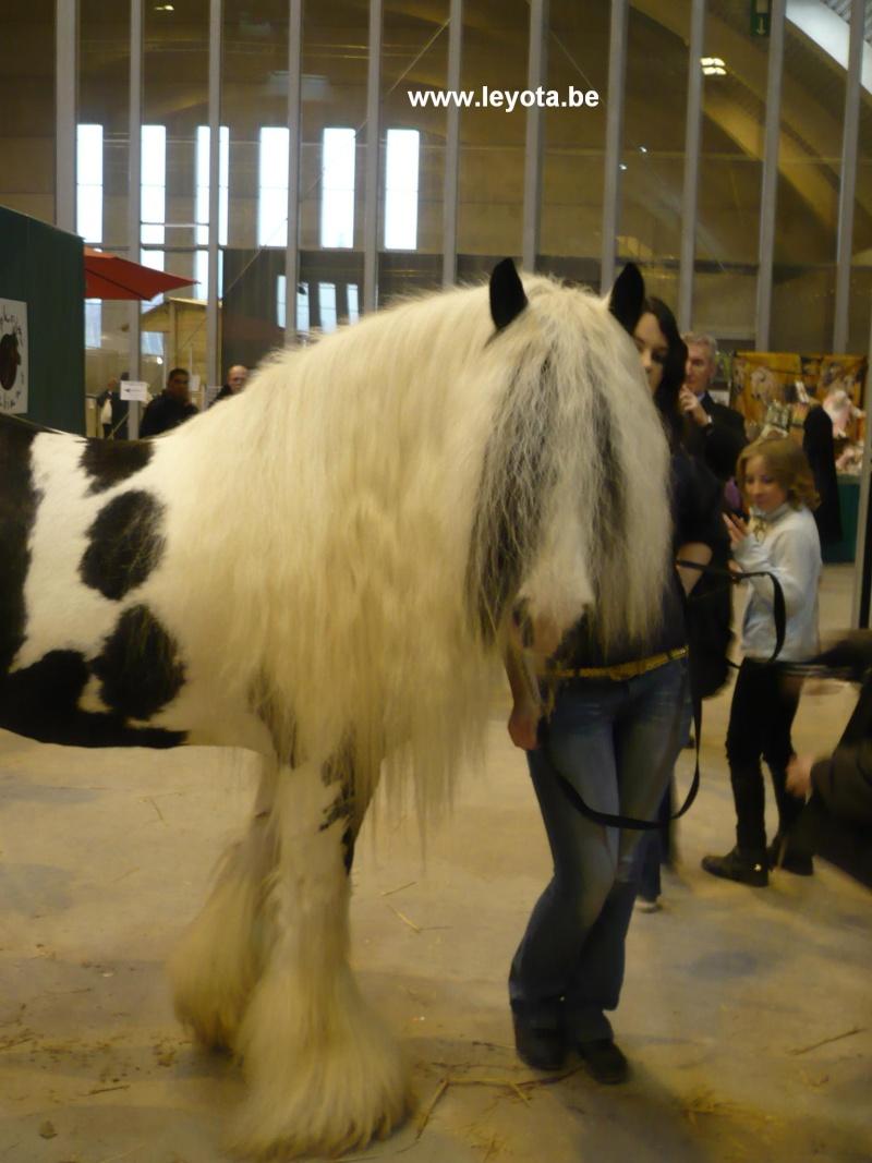 Salon du cheval ---> VIDEO + photos 2008-012