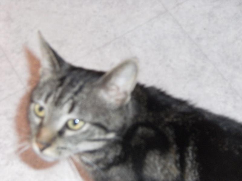 Taity, tigré de 2ans  00910