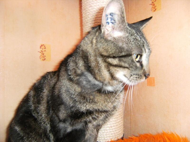 Taity, tigré de 2ans  01010