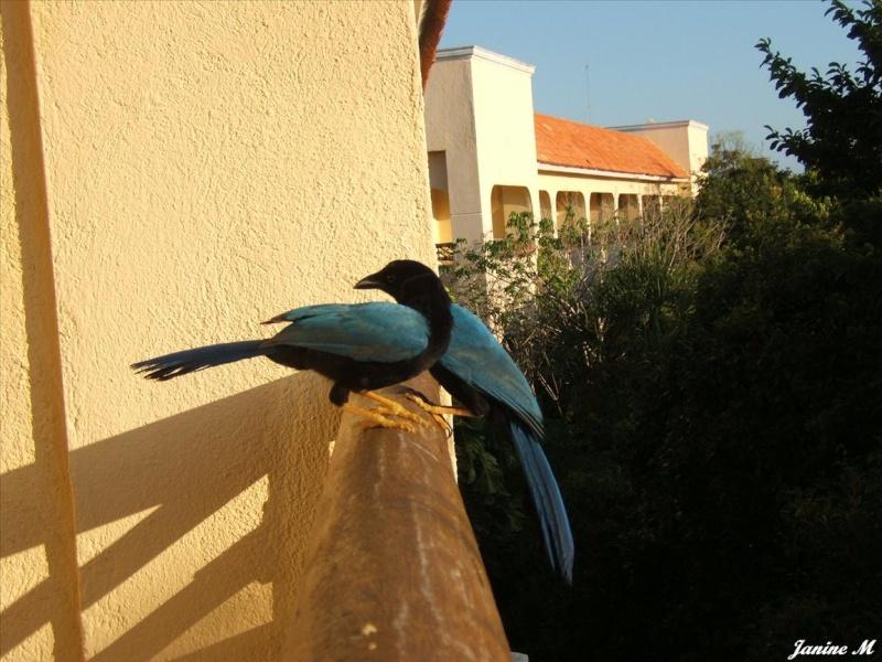 Oiseaux du Mexique !! Mexiq105