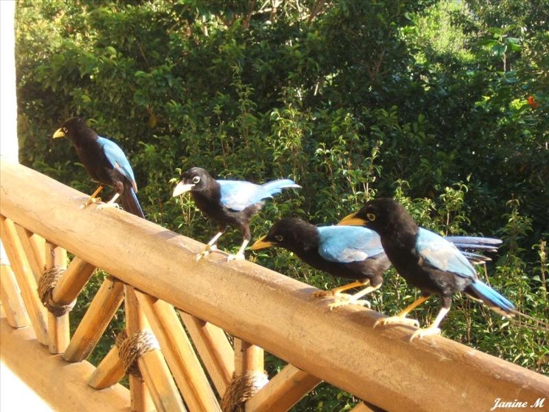 Oiseaux du Mexique !! Mexiq106