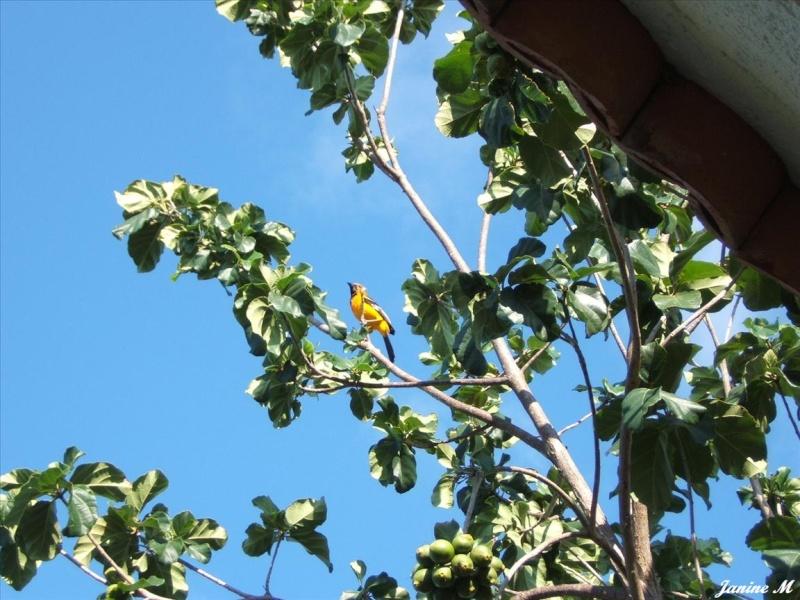 Oiseaux du Mexique !! Mexiq108