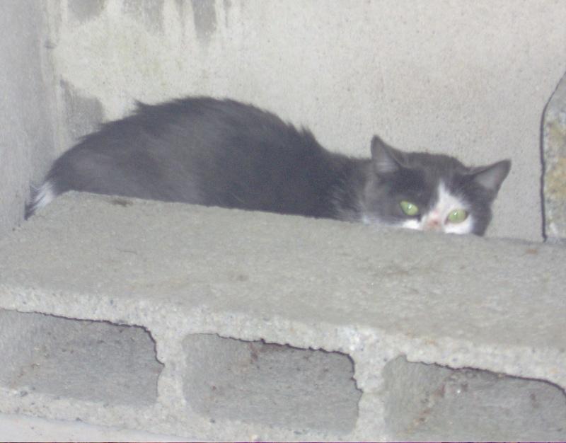 chatte et bb nés en fourriere dans la nuit du 29 au 30/09 (79 ) proche cholet Photo_60