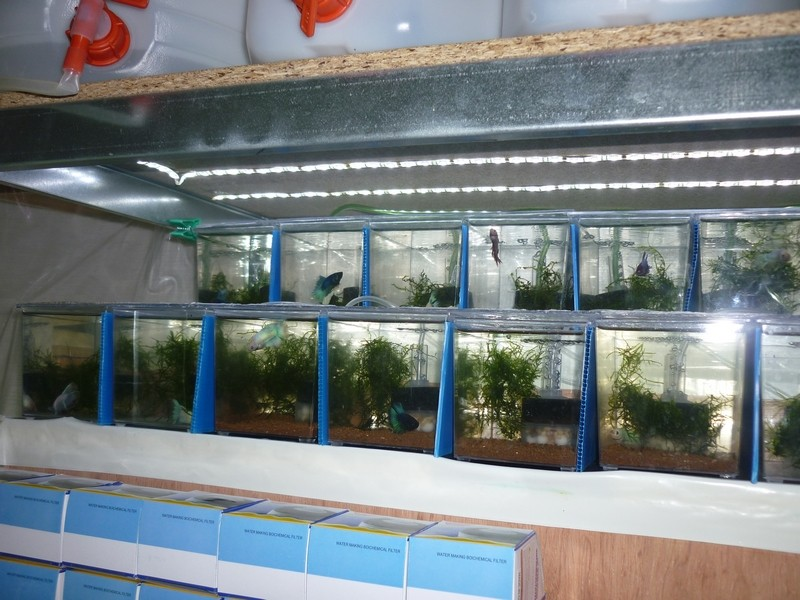 "Ma ""fishroom"". Bettag25"