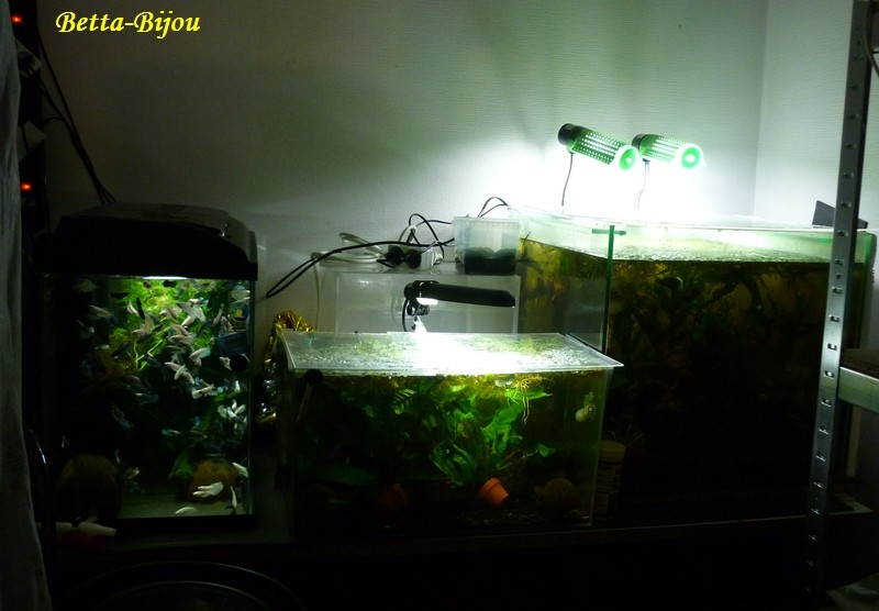 "Ma ""fishroom"". Nurser13"