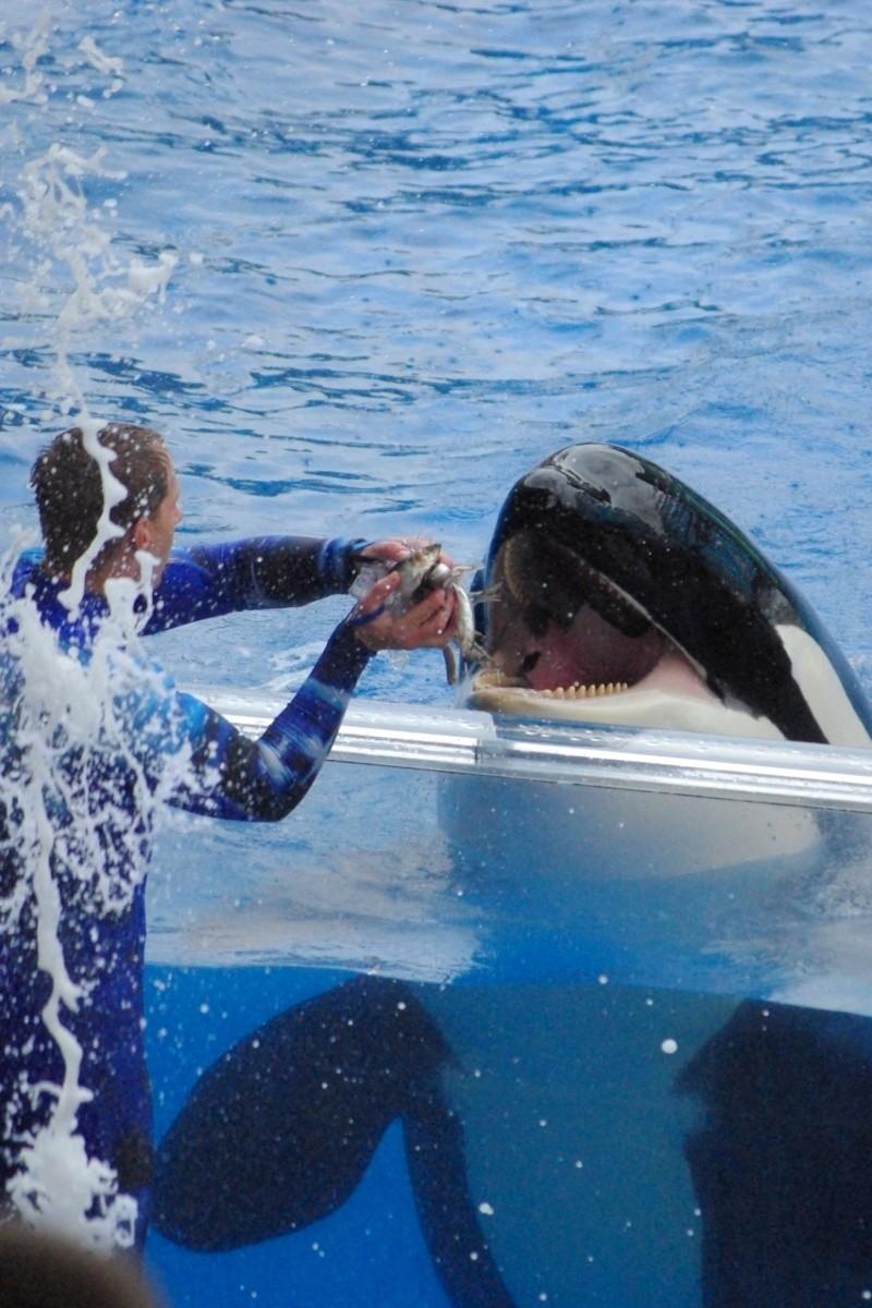15 jours en Floride : seaworld, IOA, animal kingdom et discovery cove Voyage27