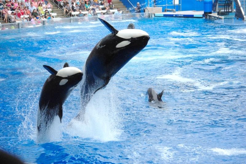 15 jours en Floride : seaworld, IOA, animal kingdom et discovery cove Voyage28