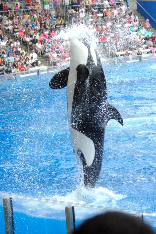 15 jours en Floride : seaworld, IOA, animal kingdom et discovery cove Voyage29