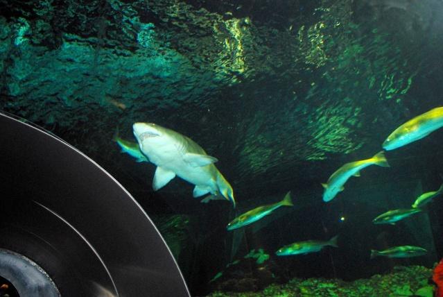 15 jours en Floride : seaworld, IOA, animal kingdom et discovery cove Voyage30