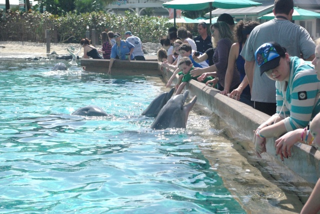 15 jours en Floride : seaworld, IOA, animal kingdom et discovery cove Voyage33