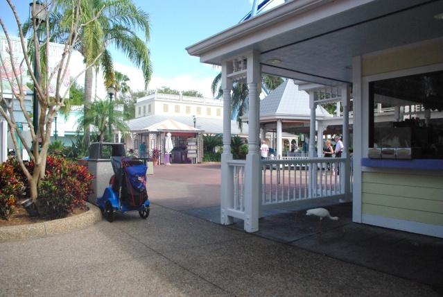 15 jours en Floride : seaworld, IOA, animal kingdom et discovery cove Voyage34