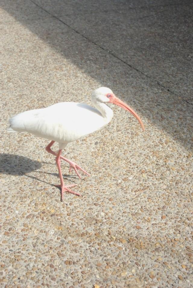 15 jours en Floride : seaworld, IOA, animal kingdom et discovery cove Voyage36